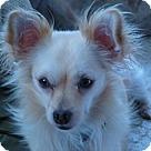 Adopt A Pet :: Lanny