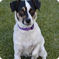 Adopt A Pet :: Jazz - Meridian, ID