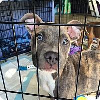 Adopt A Pet :: Tido - Sacramento, CA