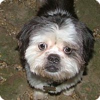 Adopt A Pet :: Lady Bug - Westport, CT
