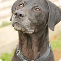 Adopt A Pet :: Hansworth - Camden, DE