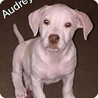 Adopt A Pet :: Audrey Hepburn-Adopted! - Detroit, MI