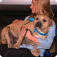 Adopt A Pet :: Sammie - Houston, TX