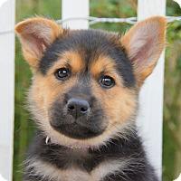 Adopt A Pet :: Peyton von Betty - Thousand Oaks, CA