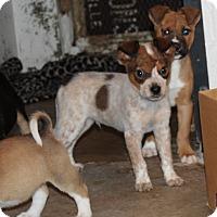 Adopt A Pet :: Maple - Harmony, Glocester, RI