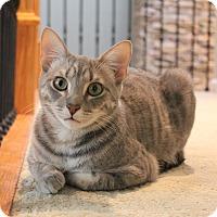 Adopt A Pet :: Simon - Carlisle, PA