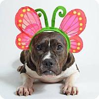 Adopt A Pet :: Madeline - Kenner, LA