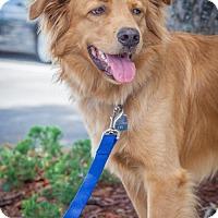 Adopt A Pet :: Brian 685 - Naples, FL