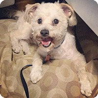 Adopt A Pet :: Roscoe - Encino, CA