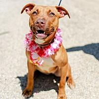 Adopt A Pet :: Thelma - Joliet, IL