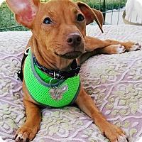 Adopt A Pet :: Clint - San Diego, CA