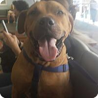 Adopt A Pet :: Cubber - Tampa, FL