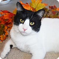 Adopt A Pet :: Junior - Bristol, CT