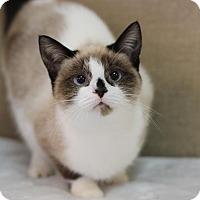 Adopt A Pet :: Fane - Midland, MI