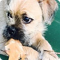 Adopt A Pet :: Izzy - Rock Hill, SC
