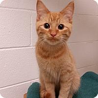 Adopt A Pet :: Doogie - Huntsville, AL