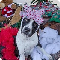 Adopt A Pet :: Alexis - Darlington, SC