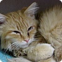 Adopt A Pet :: Katom - Grinnell, IA