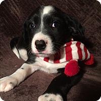 Adopt A Pet :: Benny - SOUTHINGTON, CT