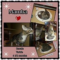 Adopt A Pet :: Mamba - Richmond, CA