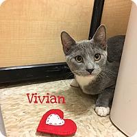 Adopt A Pet :: Vivian - Foothill Ranch, CA