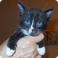 Adopt A Pet :: Joshua - Reston, VA