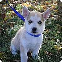 Adopt A Pet :: LoveMeDo - Broomfield, CO