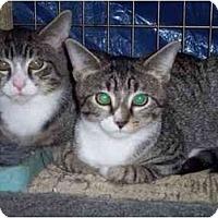 Adopt A Pet :: Itsy & Bitsy - Delmont, PA