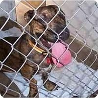 Adopt A Pet :: Howard - Scottsdale, AZ
