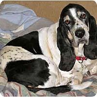 Adopt A Pet :: Wrigley - Phoenix, AZ