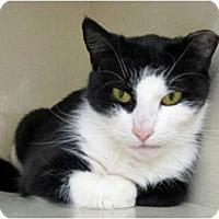 Adopt A Pet :: Boots - Riverhead, NY