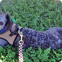 Adopt A Pet :: Paddington - Los Angeles, CA