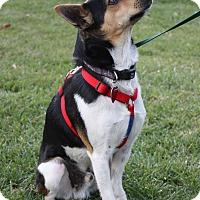 Adopt A Pet :: Divit - Winters, CA