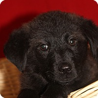 Adopt A Pet :: Micky - Waldorf, MD