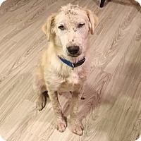 Adopt A Pet :: Birch Adopted! - Tulsa, OK