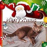 Adopt A Pet :: Ruth - Harrisburg, NC
