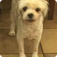 Adopt A Pet :: Anna Rose - Las Vegas, NV