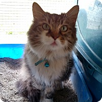 Adopt A Pet :: Missy - Benton, PA
