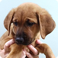 Adopt A Pet :: Golden Nuggets