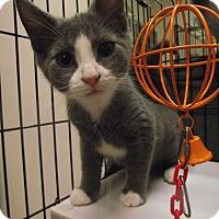 Adopt A Pet :: Franken Berry - Chambersburg, PA