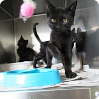 Adopt A Pet :: Chuckles - Windsor, VA
