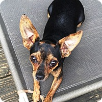 Adopt A Pet :: Lucas Sinclair - Jersey City, NJ