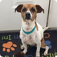 Adopt A Pet :: Tucker - URGENT FOSTER and ADOPTER NEEDED - Palm Harbor, FL