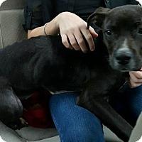 Adopt A Pet :: Tina - Catasauqua, PA