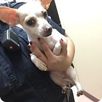 Adopt A Pet :: Lucy - Alvin, TX