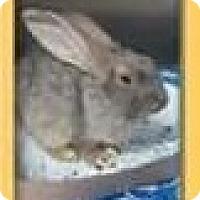 Adopt A Pet :: Alfalfa - Riverview, FL