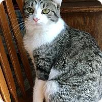 Adopt A Pet :: Icelynn - Duluth, GA