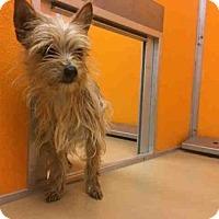 Adopt A Pet :: A027066 - Norman, OK