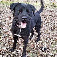 Adopt A Pet :: Arrow - Aurora, IL