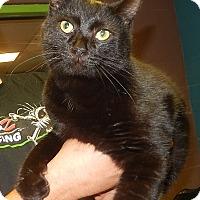 Adopt A Pet :: Edwin (Petsmart New Bern) - Newport, NC